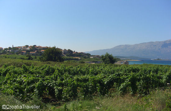 Vineyards outside Lumbarda, Korcula