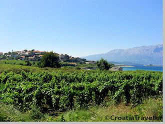 Vineyards on Korcula Island