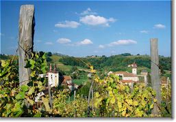 Medimurska Vineyards