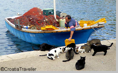 Cat feeding in Sipanska luka