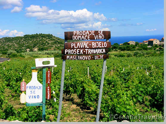 Vineyard on Vis island